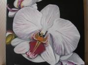 Orchidee Dessin Noir Et Blanc Galerie Creation